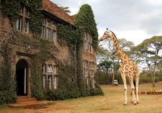 Giraffe Manor in Nairobi, Kenya.