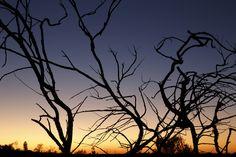 Branches | da blachswan