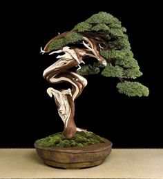 ☼֍I just love this pretty #bonsai tree.♦☺ #BonsaiInspiration