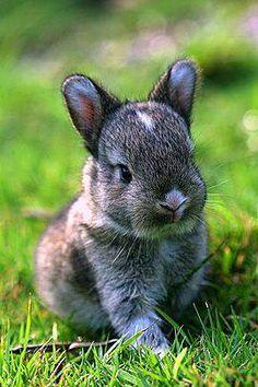 Sweet baby rabbit.