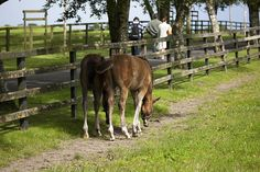 The Irish National Stud is a Thoroughbred horse breeding facility based at Tully, Kildare, County Kildare, Ireland. It was formally established by incorporation on 11 April 1946 under the National Stud Act, 1945 and is owned by the Irish Government.