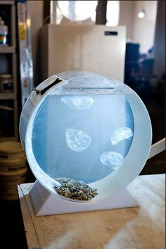 Jellyfish Tank by Jellyfish Art