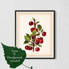 Botanical Illustration Cherry print by RestoredBotanicalArt