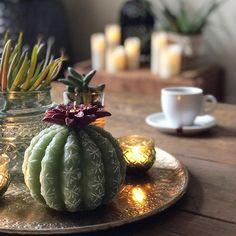 cactus meets boho home