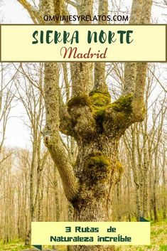 3 LUGARES DE NATURALEZA ALUCINANTE EN LA SIERRA NORTE DE MADRID Slow Travel, Rv Travel, Travel Guides, Travel Tips, Travel Destinations, Travel Blog, Ecology, Cool Places To Visit, Things To Do