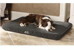 Dream Lounger Memory Foam Dog Bed