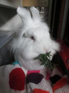 The Rosie Rabbit Blog| The Handsome Spenser