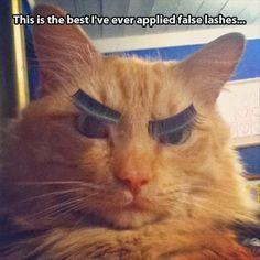eyelash kitty