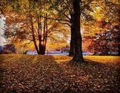 Syksy on värien helvetti.  #europe #instafinland #järvenpää #travel #traveler #traveling #travelgram #finnishboy #landscape #landscape_lovers #finnish #travelphotography #instatravel #instapic #instagramers #visitfinland #thisisfinland #discoverfinland #nature #syksy #color #autumn #finnishmoments #lovelyfinland #thebestoffinland #nature #instarunners #trailrunning #beautyofsuomi #fitness