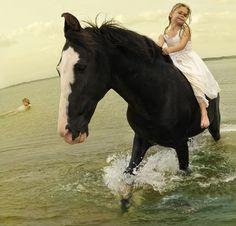 Marwari horse with girls swimming