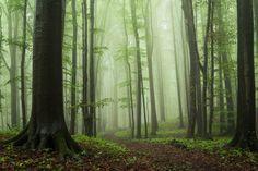 Secret Woods #3 on Behance