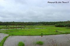 Green emerald field of Wayanad...