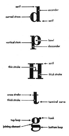 A short lesson in type Typography Terms, Typography Letters, Typography Design, Lettering, Graphic Design Lessons, Graphic Design Print, Type Anatomy, Visual Dictionary, Adobe Indesign