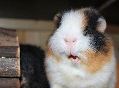 I smell food :D
