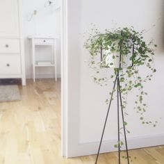 Ferm LIVING Plant Stand In Large: Http://www.fermliving.com