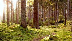 svenska skogar - Google Search