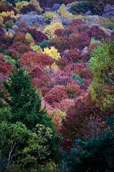 Autumn colours in the Auvergne Plum Purple, Purple Haze, Rafting, Beautiful World, Beautiful Places, Loire Valley, All Falls Down, Vacations To Go, Clermont Ferrand