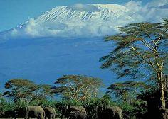 Google Afbeeldingen resultaat voor http://www.game-reserve.com/images/wildlife/elephant/elephant_mount_kilmanjaro.jpg