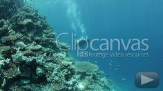 Check out this Diving Divers Scuba Diving HD Stock Footage Clip. Handheld shot made at day. Long shot. 2012-02-26, MALDIVES.
