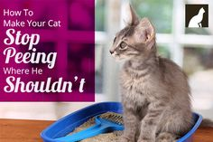 Got kittens? You should bookmark this: How to Make Your Cat Stop Peeing Where He Shouldn't
