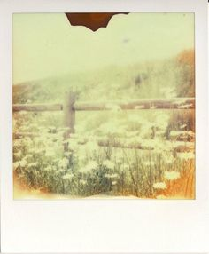 Kimberly van Groos- SX70 with PX70 color shade.