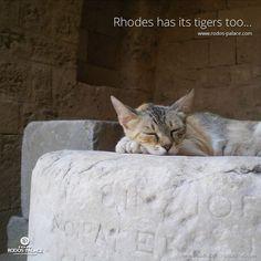 www.rodos-palace.com