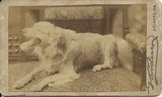 c.1880 cdv of panting dog lying in photographer's studio. His blurred head makes him look very much alive. On verso written: This is Son, dog I had when a child. Photo by M.M. & W.H. Gardner, 13 Marietta Street, Atlanta, Ga. From bendale collection