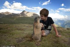 Michaela, a schoolteacher from Innsbruck, Austria, has captured this unique bond between Matteo and his marmot friends through the past four years. He said: 'I could spend hours watching animals - it gives me a connection with nature and its life forms. Animal Pictures, Cute Pictures, Baby Animals, Cute Animals, Fluffy Animals, 12 Year Old Boy, Montage Photo, Mundo Animal, Tier Fotos