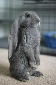 such a cute bunny!.. awwww..