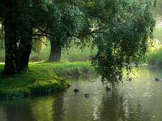 Imagem de nature