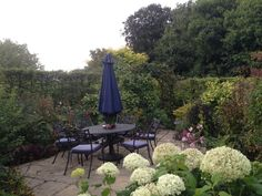 Breakfast with the birds chirping, perfect. NGS Gardens open for charity - Garden