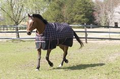 Lami-Cell Reflective Plaid Turnout Medium Weight by Lami-cell. $149.25. These waterproof and breathable turnouts feature a nylon lining to keep your horses coat smooth and polished. These turnouts also feature 600D ripstop polyester, shoulder gussets, double-buckle front closure with fixed web loop, tail flap, two belly surcingles, detachable elastic leg straps and a reusable zipper bag.. Save 10%!