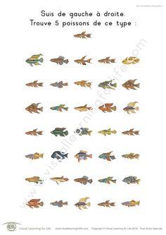 Dans les fiches de travail « Suivi de poisson » l'élève doit trouver tous les poissons identiques à l'exemple en haut de la page.