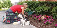 petsafe-pawz-away-pet-barrier-in-garden