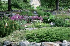 Sirpan kalliopuutarhan kasveja Garden Cottage, Backyard, Patio, Garden Planning, Garden Plants, Perennials, Stepping Stones, Landscape, Outdoor Decor