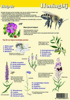 Educatieve kaart Help de honingbij (dubbelzijdige kaart) #drachtplanten #honingbij #imker Beauty And The Bees, Outdoor Learning, All Nature, Grow Your Own Food, Science For Kids, Bee Keeping, Botany, Ecology, Organic Gardening