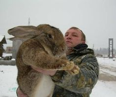 Only in Russia??? Omg huge rabbit ha