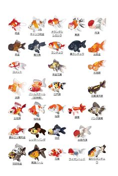 Goldfish Types, Goldfish Pond, Koi Art, Fish Art, Fish Drawings, Animal Drawings, Koi Fish Colors, Colorful Fish, Tropical Fish