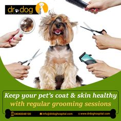 Dr Dog Hospital is only 24 Hr & No 1 Pet multipolarity hospital in Hyderabad aims to offer smiles by providing best treatment to all breads of pet Dogs, Cats. Over 7 years, we assessed needs and always provided high quality veterinary services (surgeries, consulting, medicines, pet diet & care both in-patient & Home visit. Our team of expert Veterinary doctors always round the clock to shower all the love and care to your loved one need. We are proud to be No 1 Pet Hospital. Veterinary Surgeon, Veterinary Services, Dental Services, Small Animal Hospital, Pet Hospital, Pet Clinic, Love Your Pet, Dog Boarding