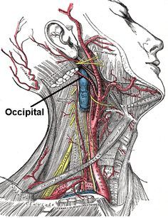 Occipital Nerve - a close Cranial Nerve near the Trigeminal Nerve