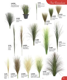 Plan Create your own version of the RHS Feel Good Garden - New ideas Modern Landscaping, Landscaping Plants, Front Yard Landscaping, Landscaping Ideas, Garden Plants, Ornamental Grass Landscape, Ornamental Grasses, Landscape Grasses, Front Porch Landscape