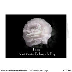 Administrative Professionals Day Pale Pink Rose Card A single ultra pale pink rose on a black background decorates the front of this classy Administrative Professionals Day greeting card. Inside, the background is ultra pale pink, with appreciation text. You can easily change or delete the text on the inside. Original photograph by Alan Socolik. All Rights Reserved © 2013 Alan & Marcia Socolik.