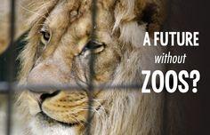 Not My Circus, Animal Cruelty, Animals, Animales, Animaux, Animal, Animais