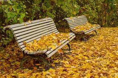 Syksyinen puisto - syksy lokakuu puisto kaupunkimaisema lehtipuut vaahteranlehdet pudonneet väriloisto nurmikko Vartiovuorenmäki puistonpenkit