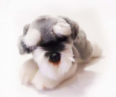 CUDDLY CRITTERS SOFT PLUSH SCHNAUZER STELLA I COOL CAT COLLECTABLES