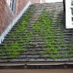 Roof moss image