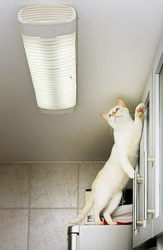 I just know I'll catch my cat doing this someday......trying to catch a fly for a snack!