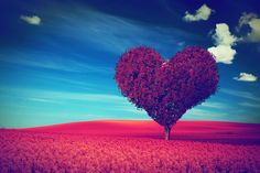 #Heart shape #tree with red leaves on red #flower field. #Love symbol, concept for #Valentine's Day,