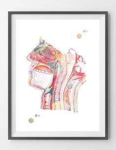 Respiratory system watercolor print Nose Mouth Throat Larynx anatomy art poster Human Head section air pathway medical art print wall decor Medical Illustration, Illustration Art, Art Illustrations, Wall Art Prints, Fine Art Prints, Dental Art, Kunst Poster, Human Head, Medical Art