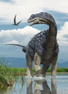 Diamantinasaurus (dinosaurio titanosauriano del Cretácico de Australia, 97mA) (Herschel Hoffmeyer)